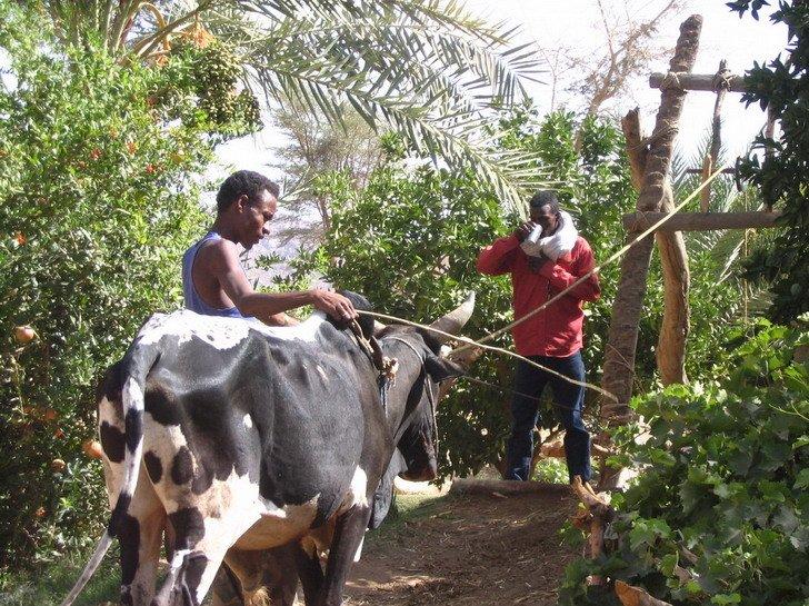 Economie de Timia dans Liens Mohamed-Tassalwat-2